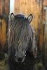 Gammur from Steinnes